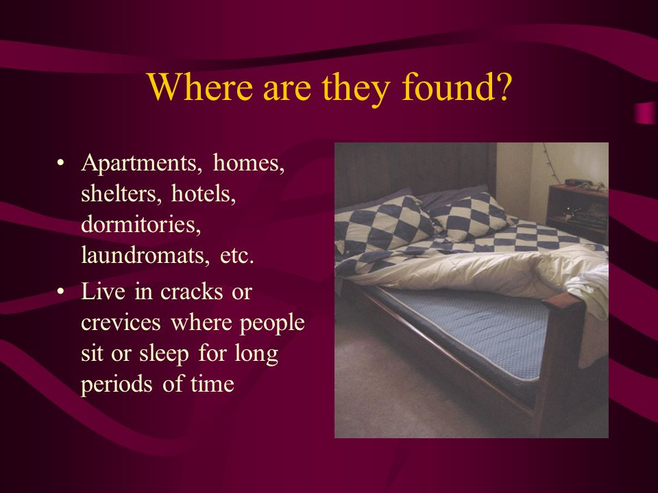 Where are they found Apartments, homes, shelters, hotels, dormitories, laundromats, etc.