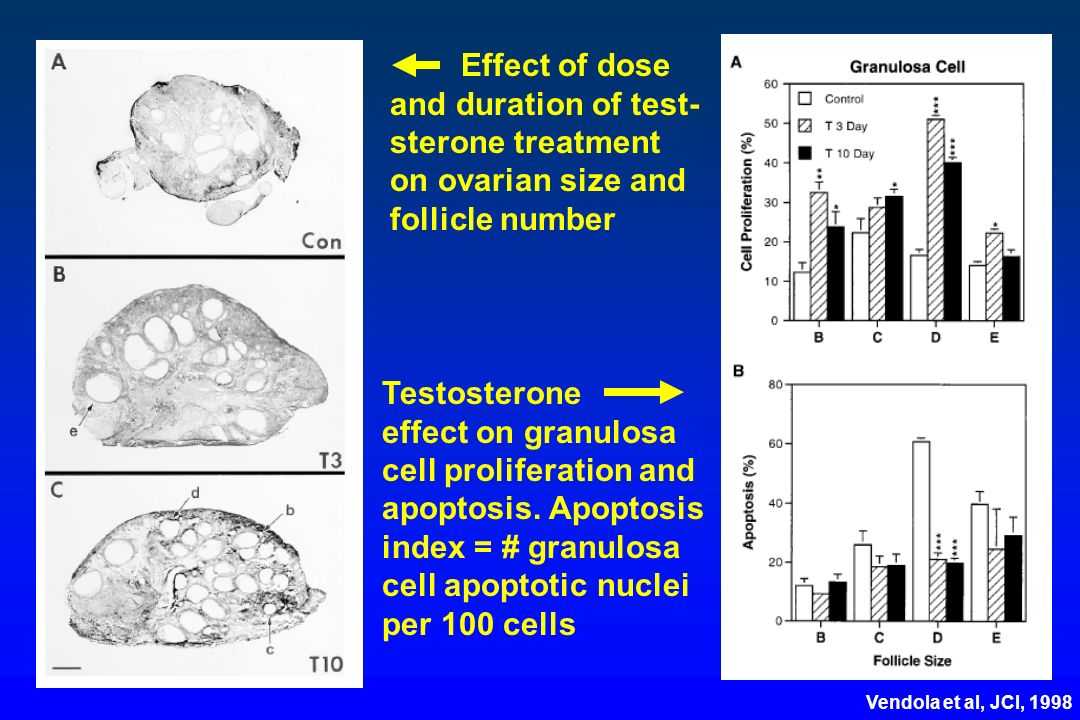 Effect of dose and duration of test- sterone treatment on ovarian size and follicle number