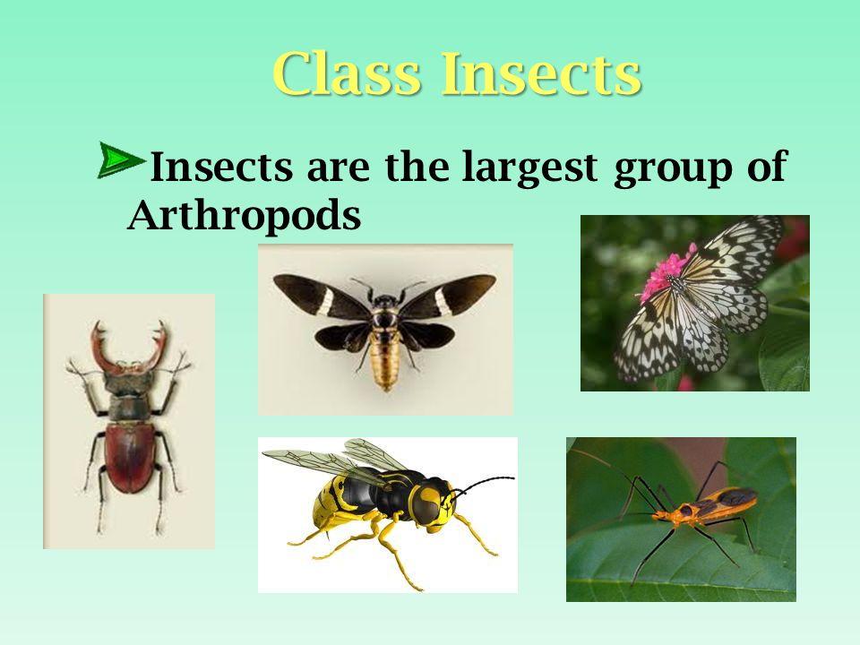 KINGDOM ANIMALIA Phylum Arthropoda - ppt video online download