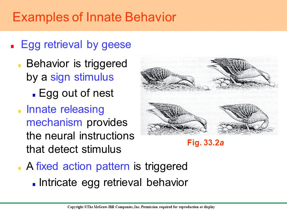 331 Approaches To The Study Of Behavior Ppt Video Online Download