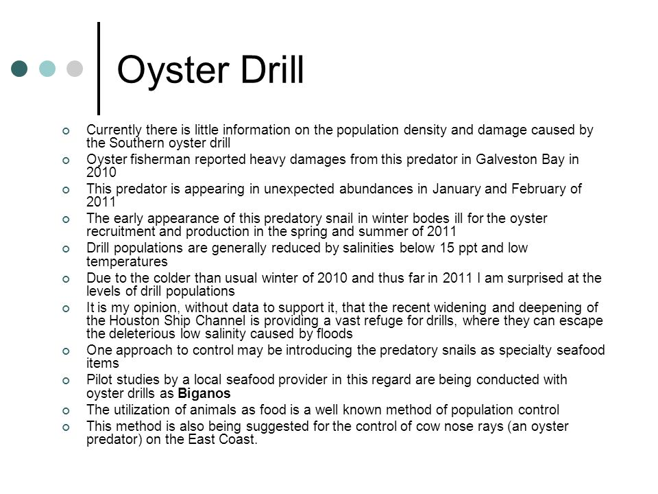 Oyster Drill Currently there is little information on the population density and damage caused by the Southern oyster drill.