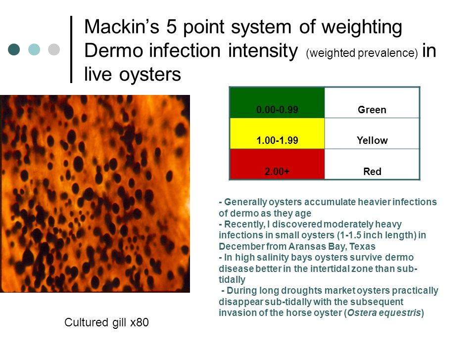 Mackin's 5 point system of weighting Dermo infection intensity (weighted prevalence) in live oysters
