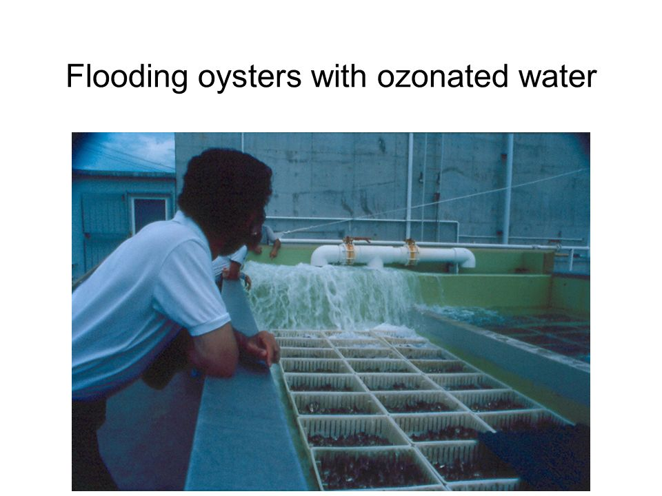 Flooding oysters with ozonated water