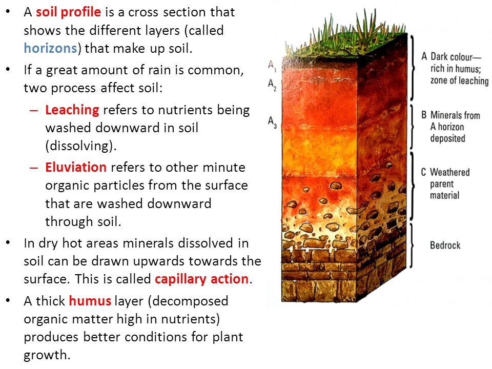 Physical geography unit 3 ecosystems ppt download for What are the different layers of soil