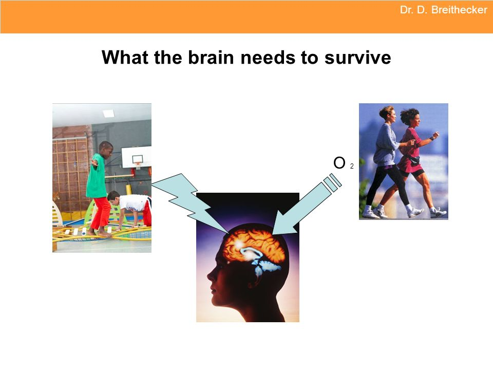 What the brain needs to survive