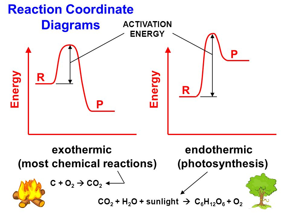 What Kind of Reaction Is Photosynthesis?