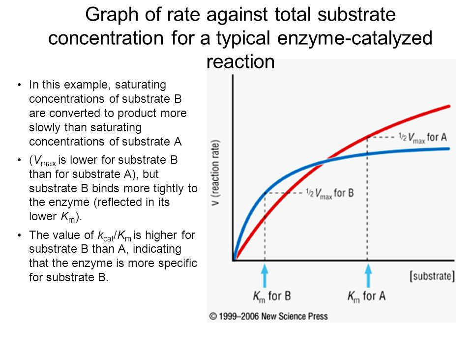 substrate concentration coursework Enzymes: practice questions #1 1 the graph below shows the effect of substrate concentration on the action of enzyme x this.