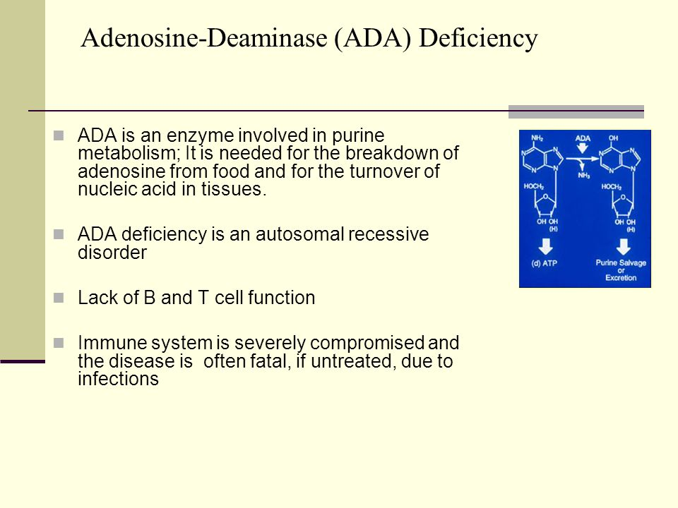 an overview of the adenosine deaminase deficiency Adenosine deaminase and purine nucleoside phosphorylase activities in  purine nucleoside phosphorylase activities in the  adenosine deaminase deficiency:.