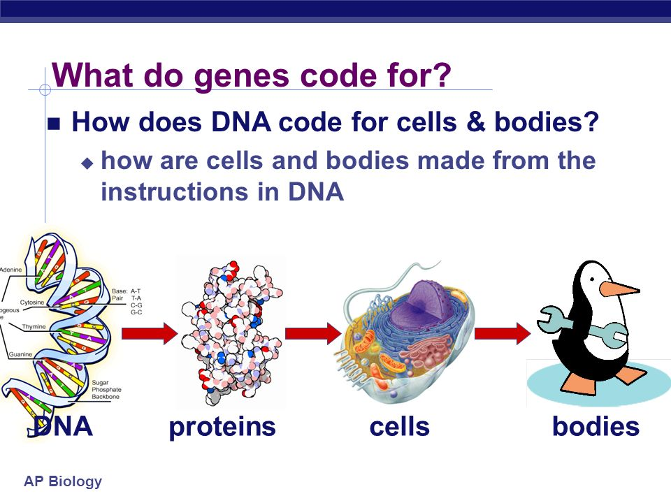 cell biology essays Biology essays - free download as text file (txt), pdf file (pdf) or read online for free.