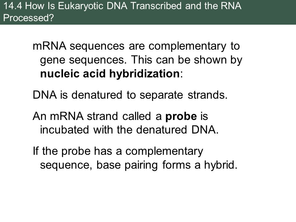 how to find the complementary mrna sequence