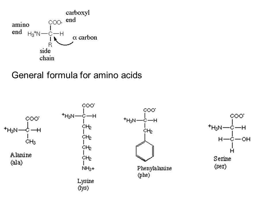 General formula for amino acids