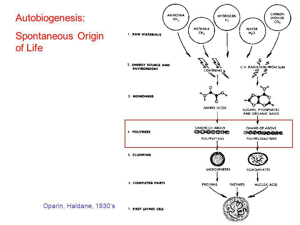 Spontaneous Origin of Life