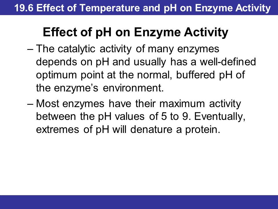 effect of temperature on amylase activity Enzyme activity depends upon several factors including temperature and ph in thus investigation i will look at the effect of temperature on the enzyme amylase 2 thoughts on  the effect of temperature on amylase  ameena says: march 6, 2017 at 12:40 am.
