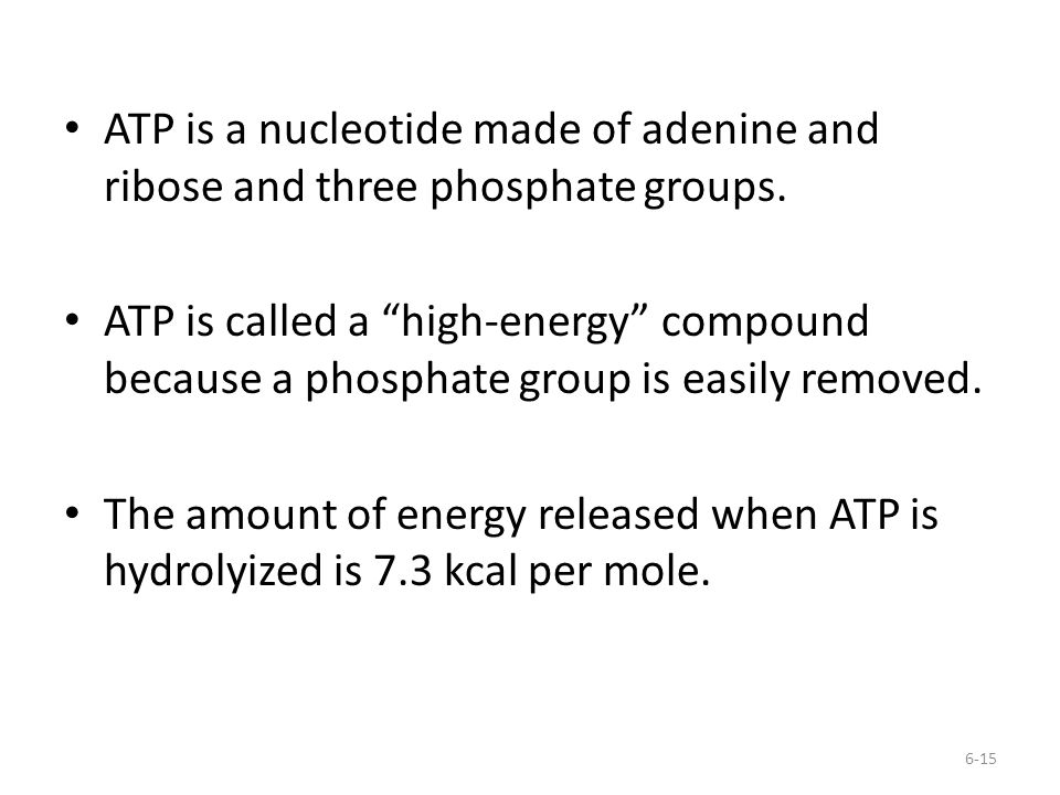 ATP is a nucleotide made of adenine and ribose and three phosphate groups.