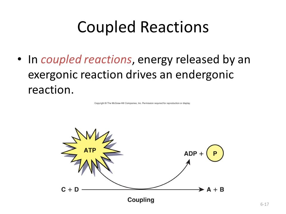 Coupled Reactions In coupled reactions, energy released by an exergonic reaction drives an endergonic reaction.