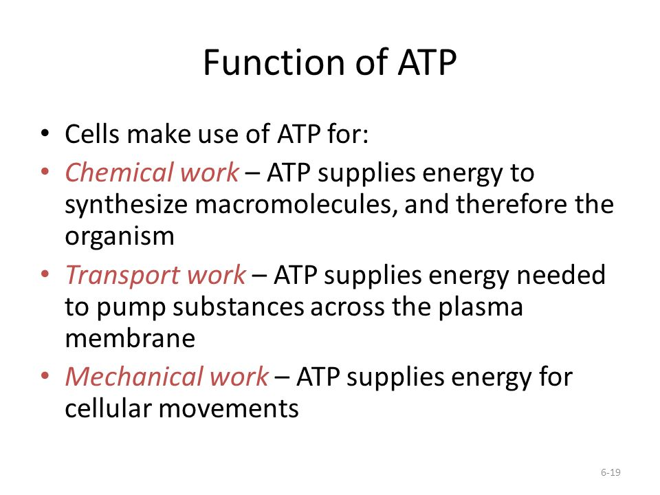 Function of ATP Cells make use of ATP for: