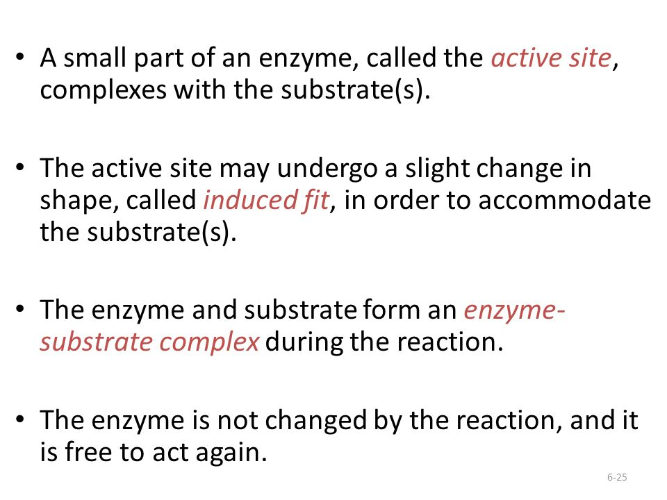 A small part of an enzyme, called the active site, complexes with the substrate(s).