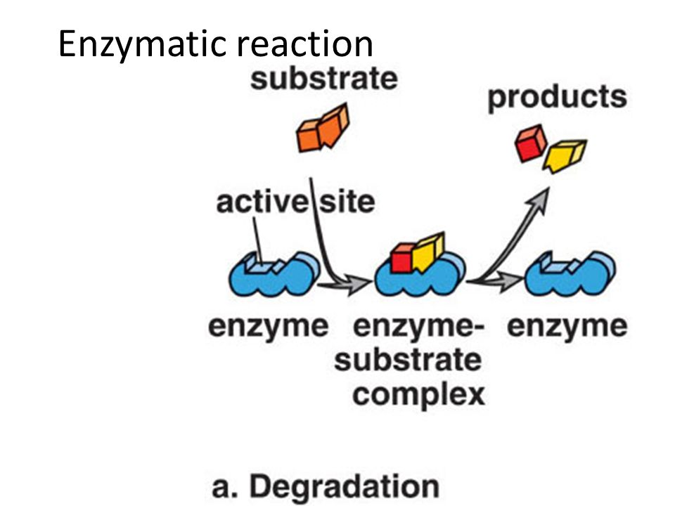 Enzymatic reaction