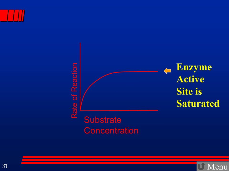 Enzyme Active Site is Saturated