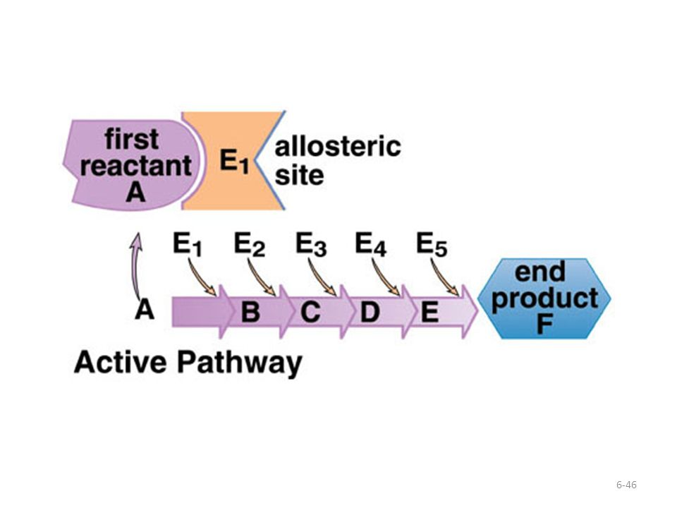 This diagram shows the active pathway