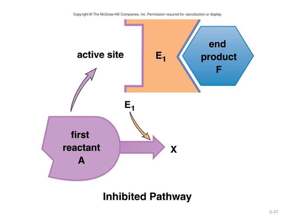 This diagram shows the inhibited pathway