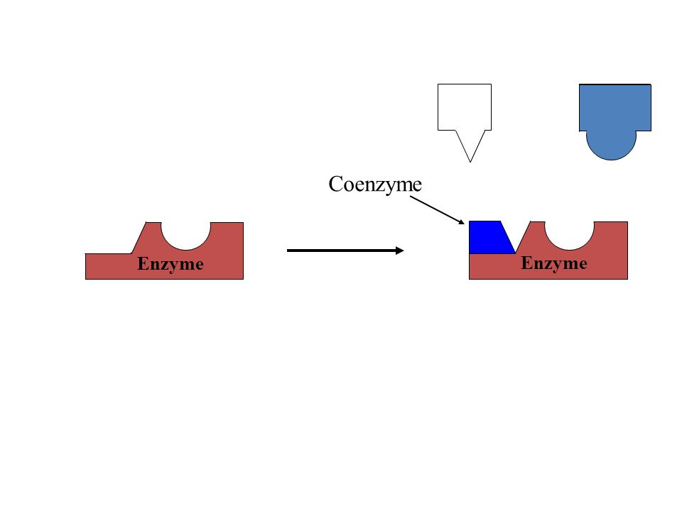 Enzyme Coenzyme Enzyme