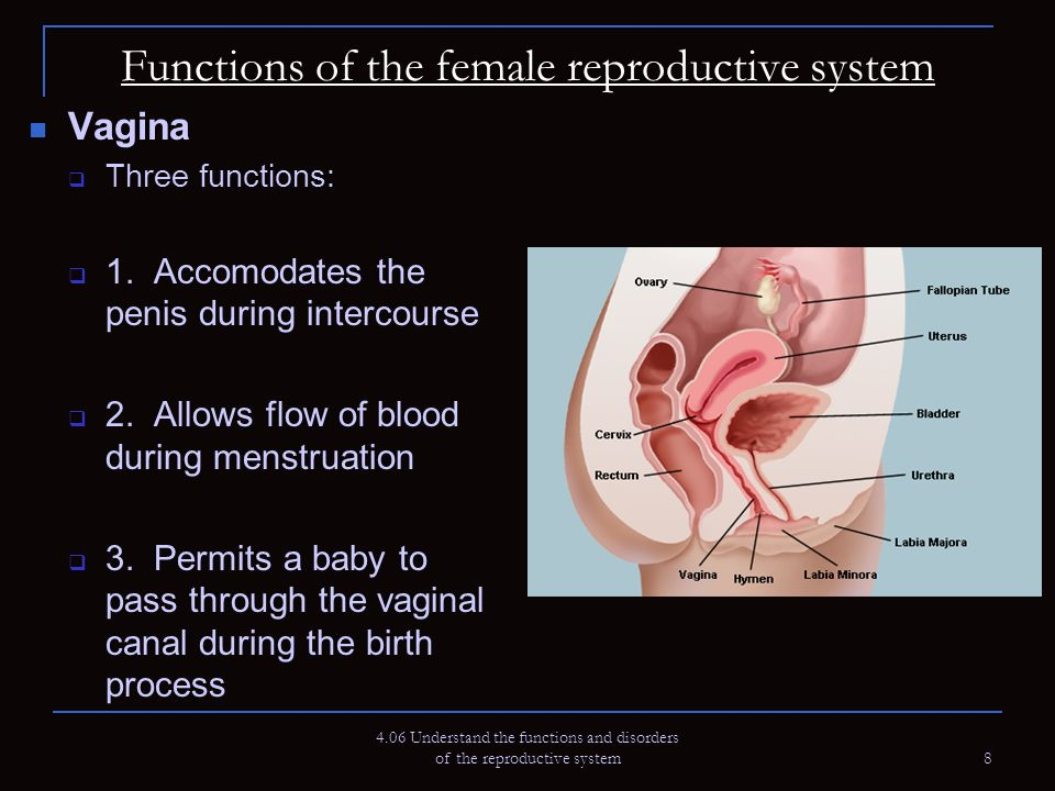 functions of the vagina