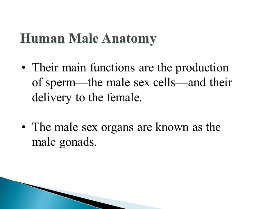 Sperm cell definition of sperm cell by The Free Dictionary - oukas.info