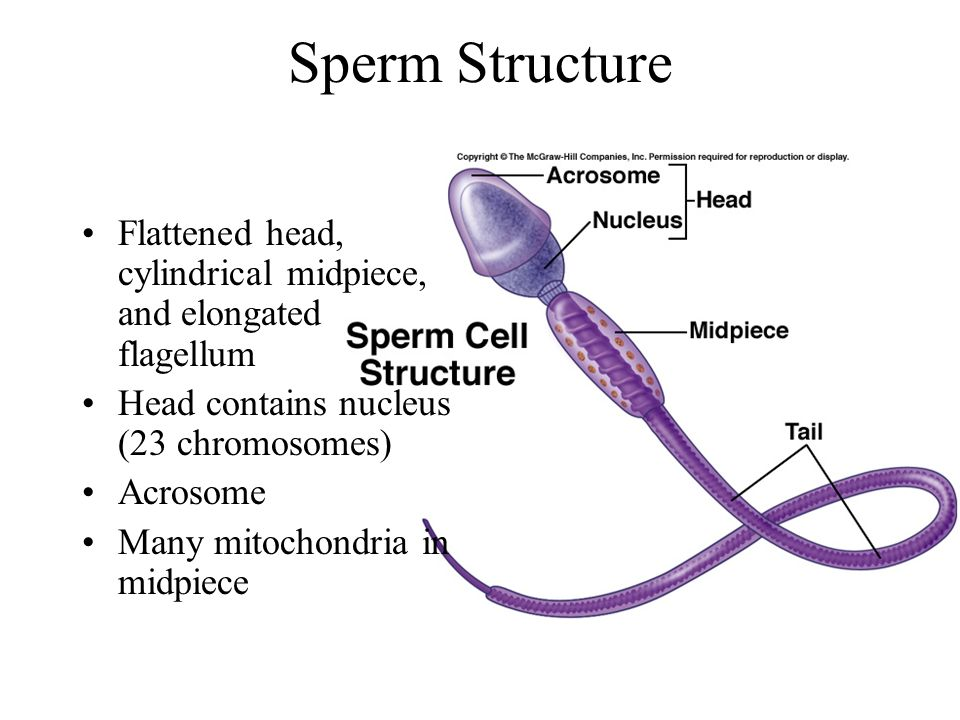 structure sperm tail jpg 853x1280