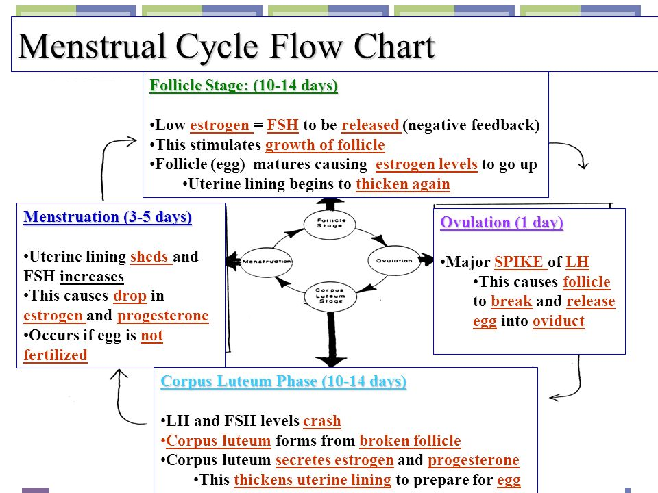 flow chart of menstual cycle: Human reproductive systems ppt video online download