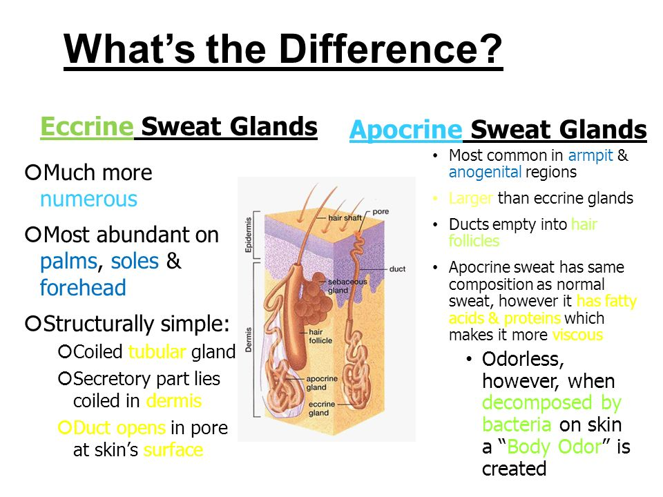 Appendages Of The Skin You Ll Need 4 Different Colored