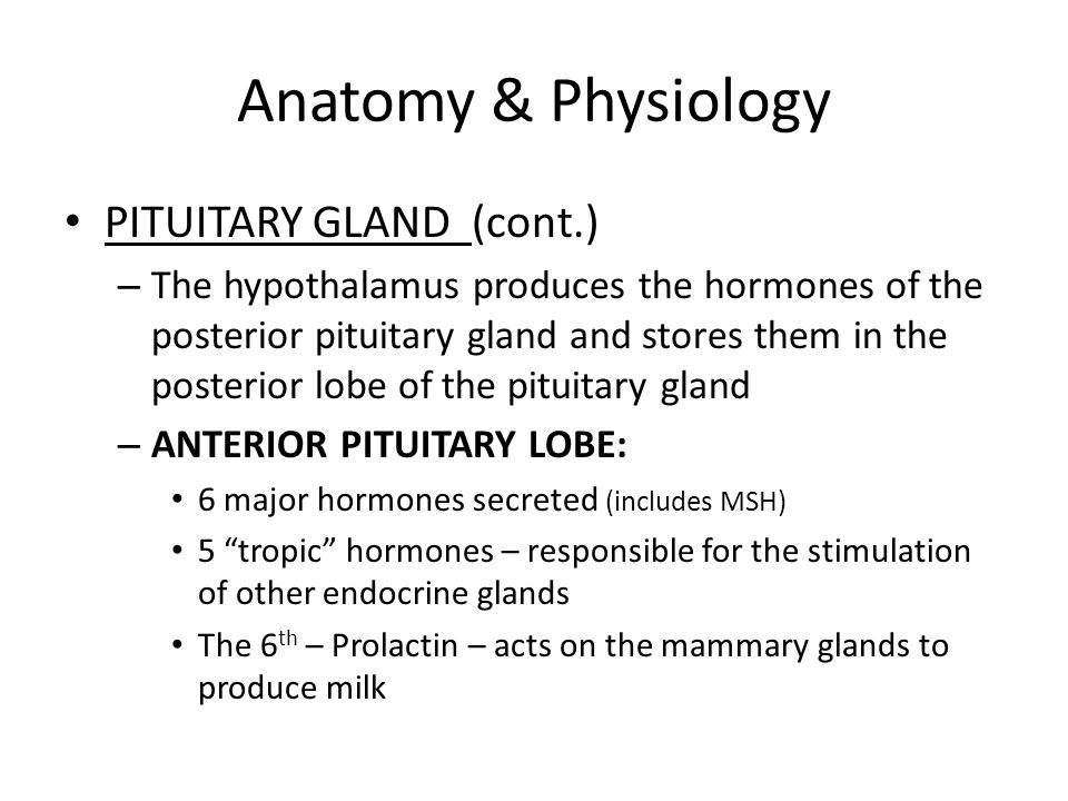 Attractive Anatomy And Physiology Of Anterior Pituitary Gland ...