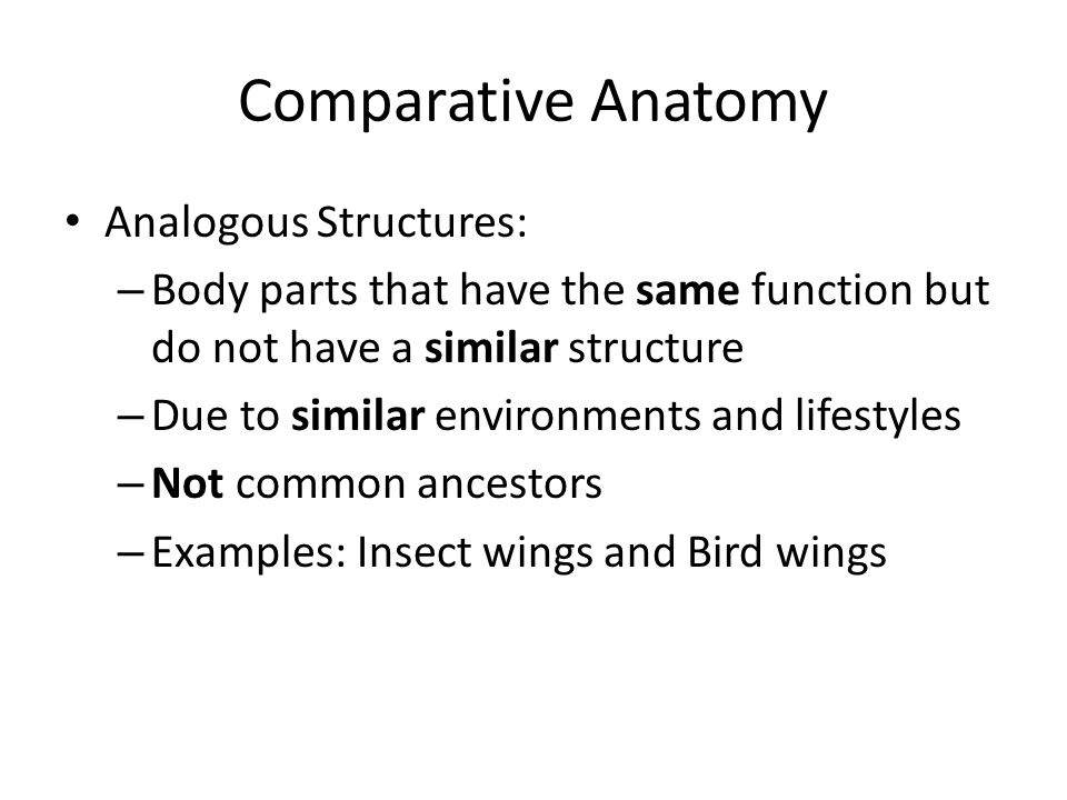 Colorful Comparative Anatomy Examples Picture Collection Anatomy