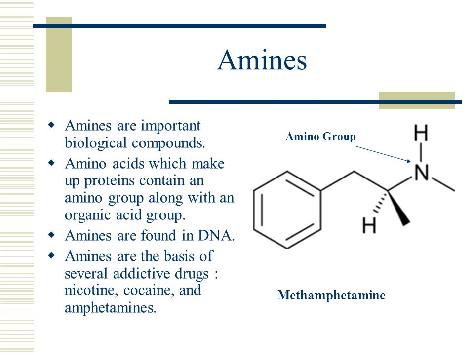 Amines Amines are important biological compounds.