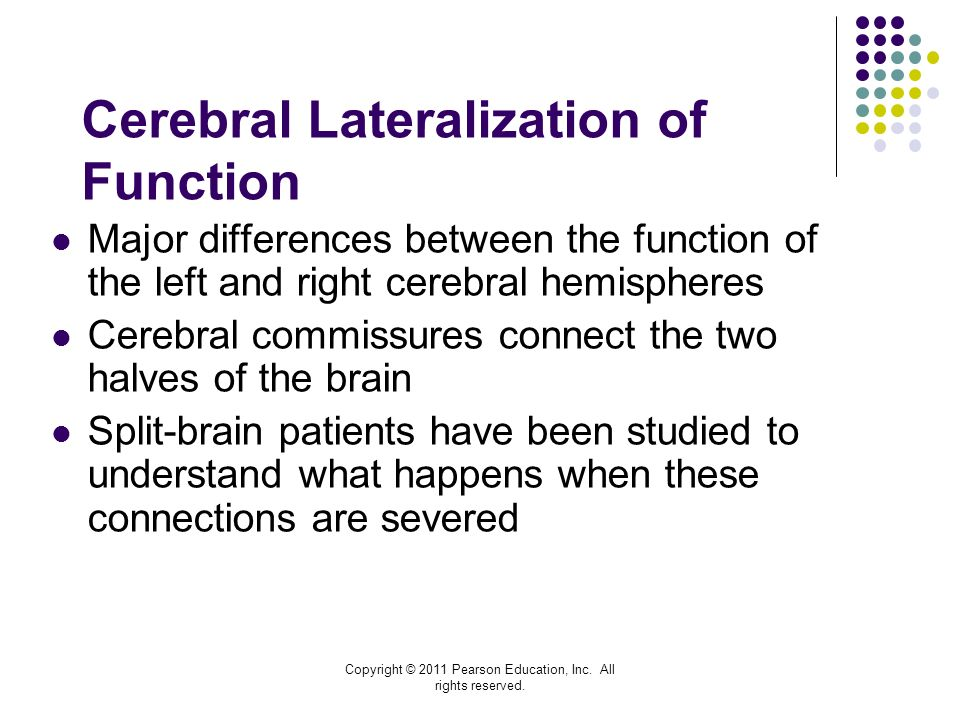 cerebral lateralization Cerebral hemispheric lateralization alludes to the localization of brain function on either the right or left sides of the brain recent research indicates that it is encoded at the level of axon terminal morphology.