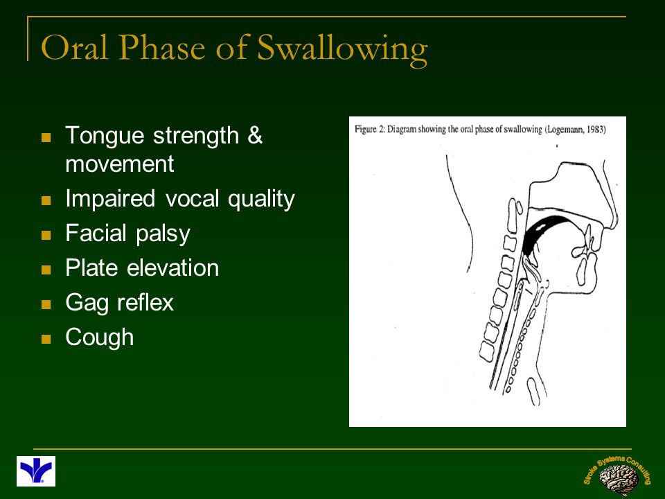 Oral Phase of Swallowing