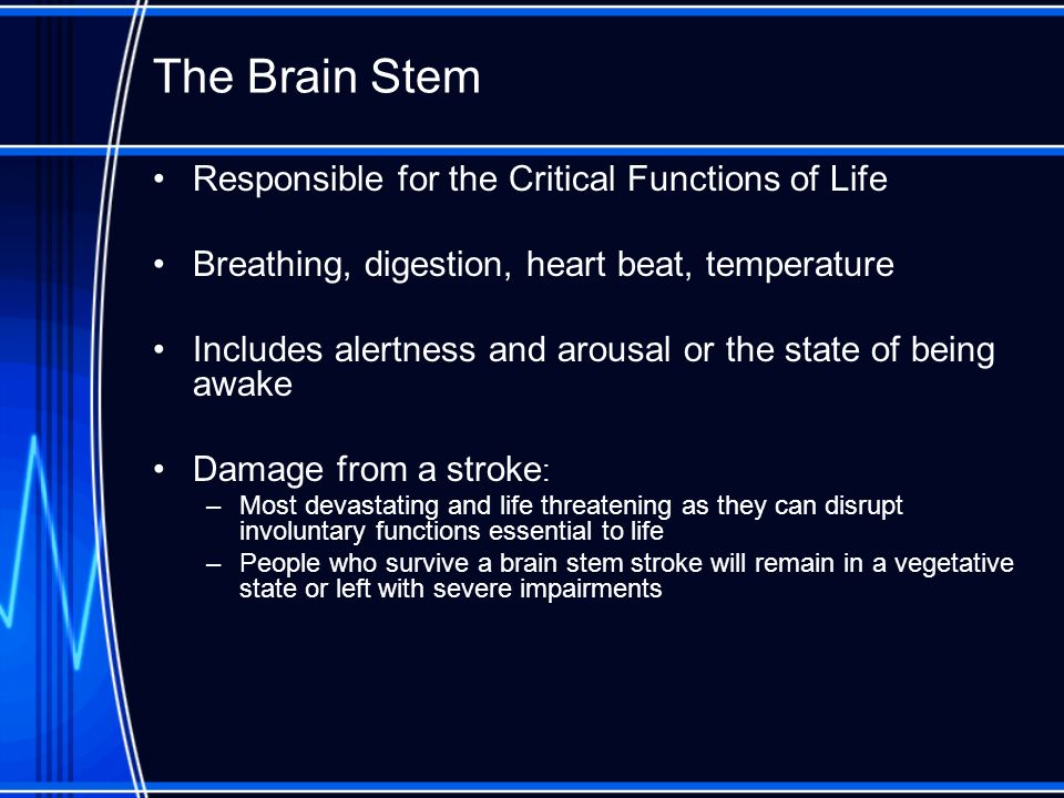 The Brain Stem Responsible for the Critical Functions of Life