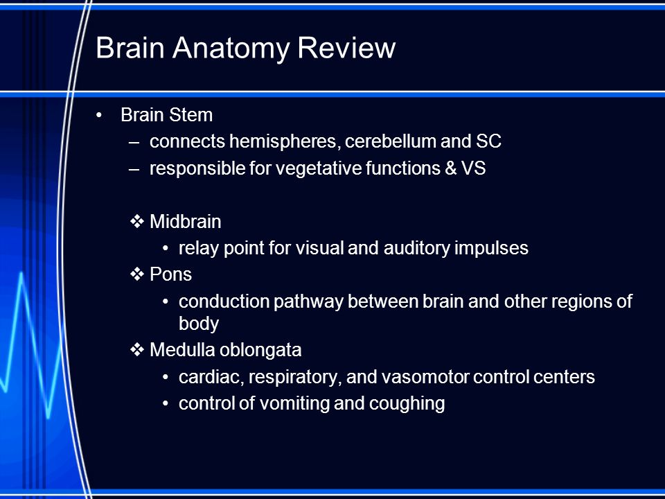 Brain Anatomy Review Brain Stem