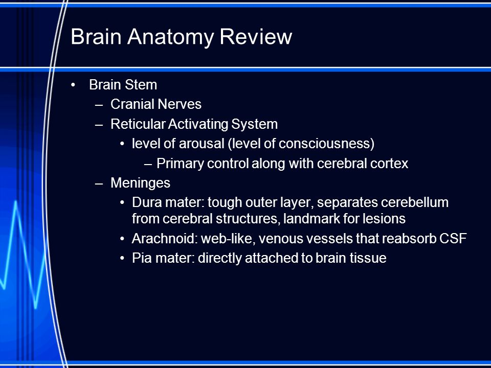 Brain Anatomy Review Brain Stem Cranial Nerves