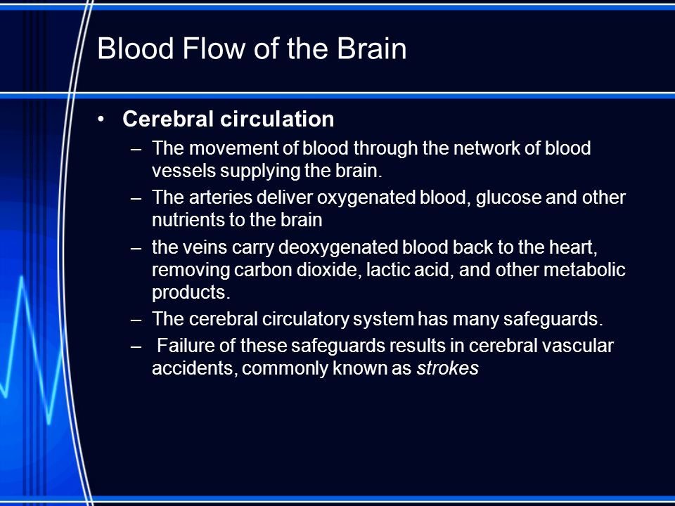 Blood Flow of the Brain Cerebral circulation