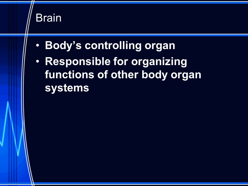 Brain Body's controlling organ Responsible for organizing functions of other body organ systems