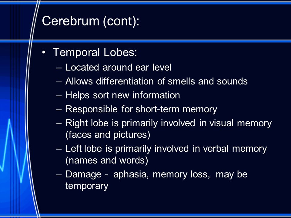 Cerebrum (cont): Temporal Lobes: Located around ear level