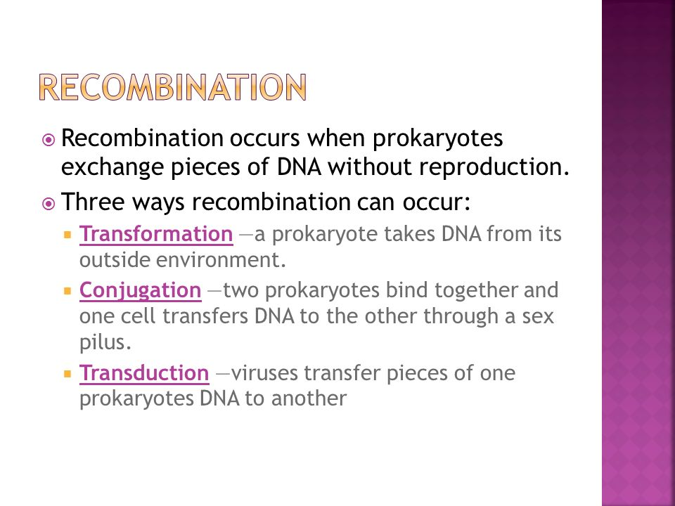 a research on the occurrence of genetic transformation in bacteria ecoli Bacteria make useful tools for genetic research because of their relatively small genome size compared to eukaryotes e coli cells only have about 4,400 genes whereas the human genome project has determined that humans contain approximately 30,000 genes.