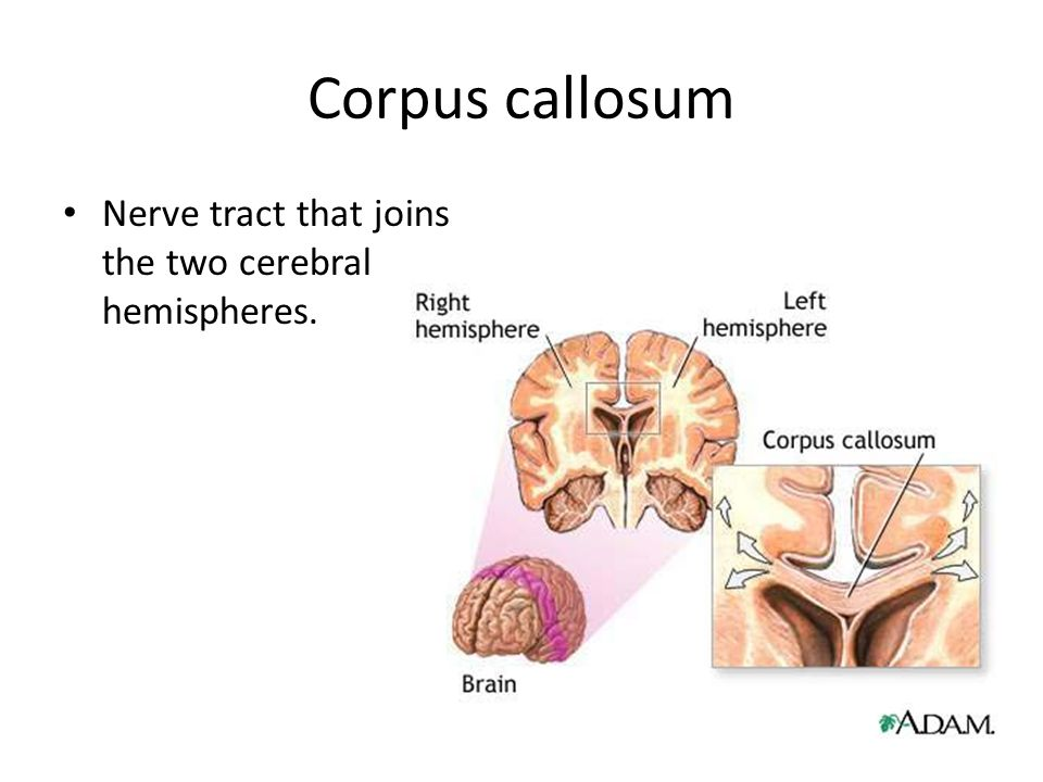 Section 9.3 Assignment The Central Nervous System - ppt ...