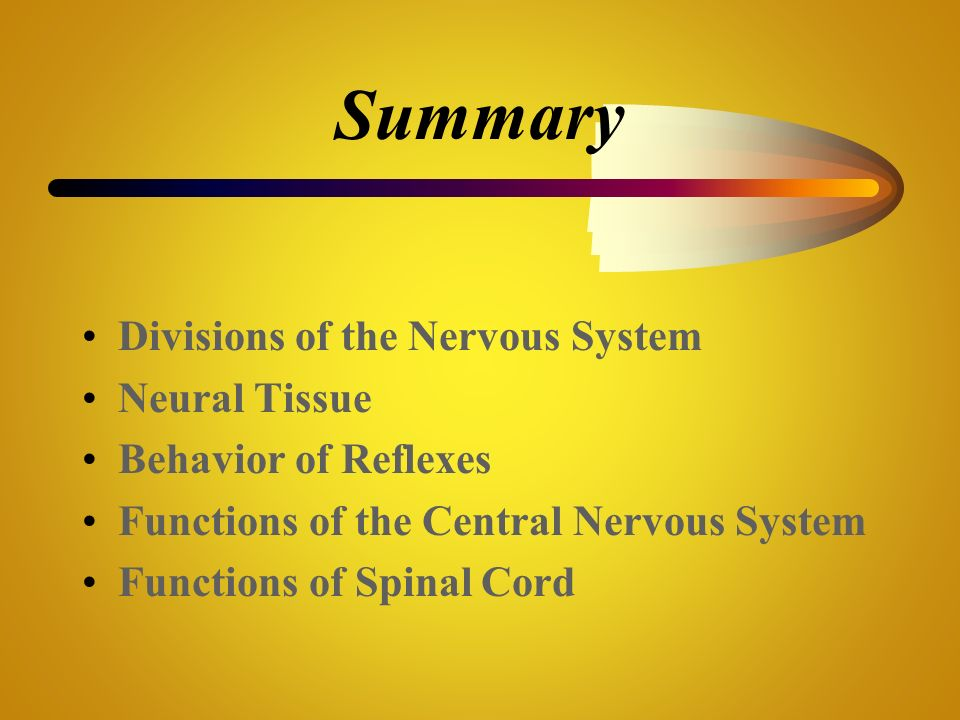 Summary Divisions of the Nervous System Neural Tissue
