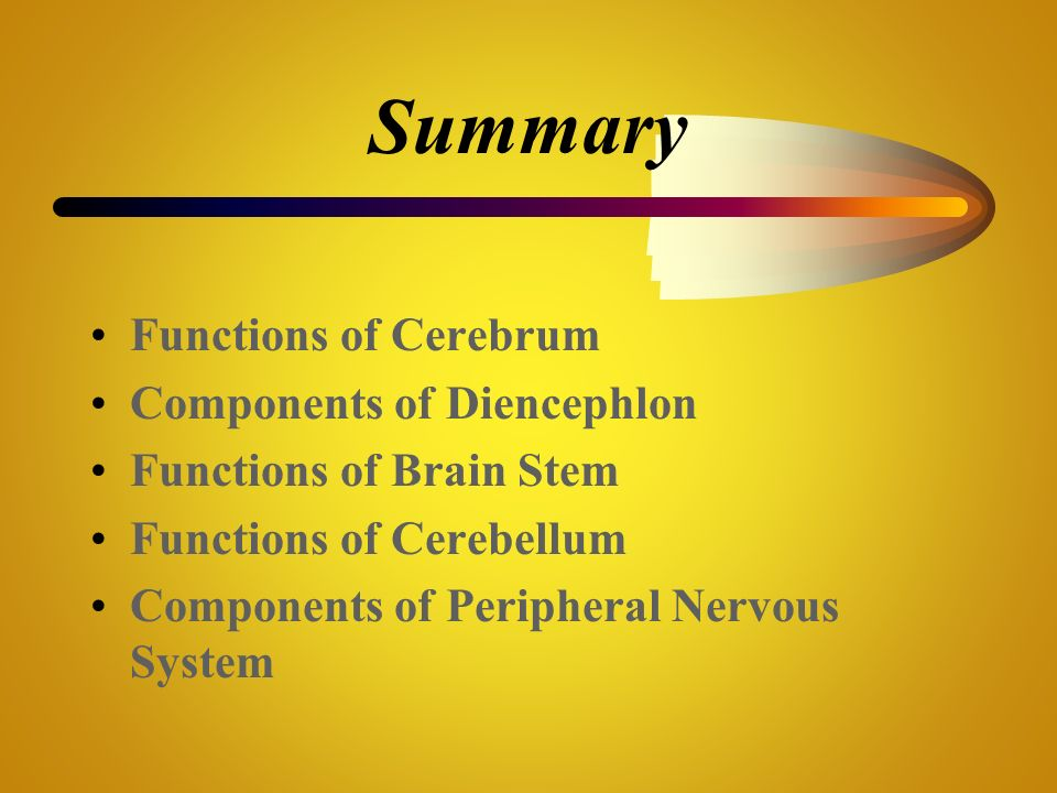 Summary Functions of Cerebrum Components of Diencephlon