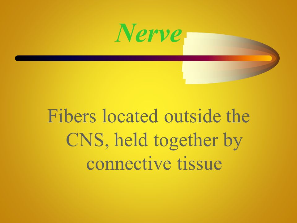 Fibers located outside the CNS, held together by connective tissue