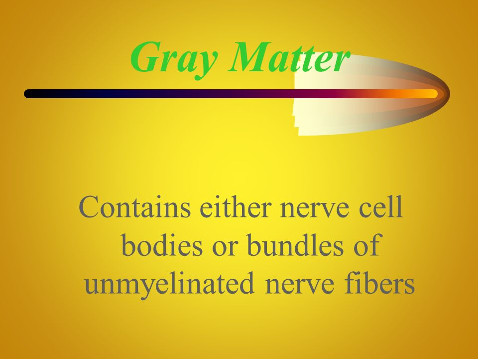 Gray Matter Contains either nerve cell bodies or bundles of unmyelinated nerve fibers