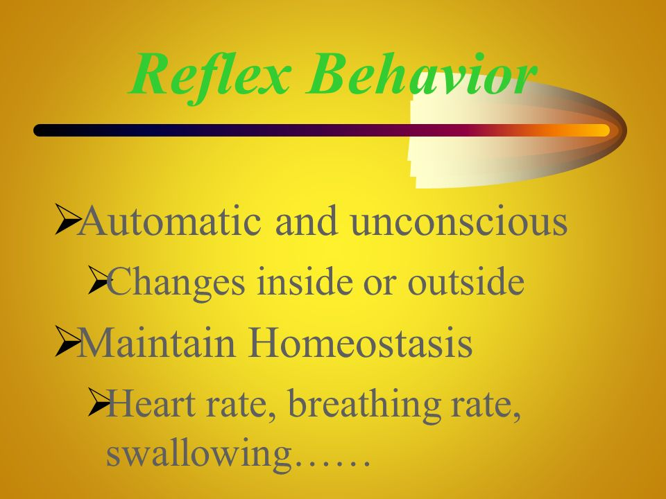 Reflex Behavior Automatic and unconscious Maintain Homeostasis