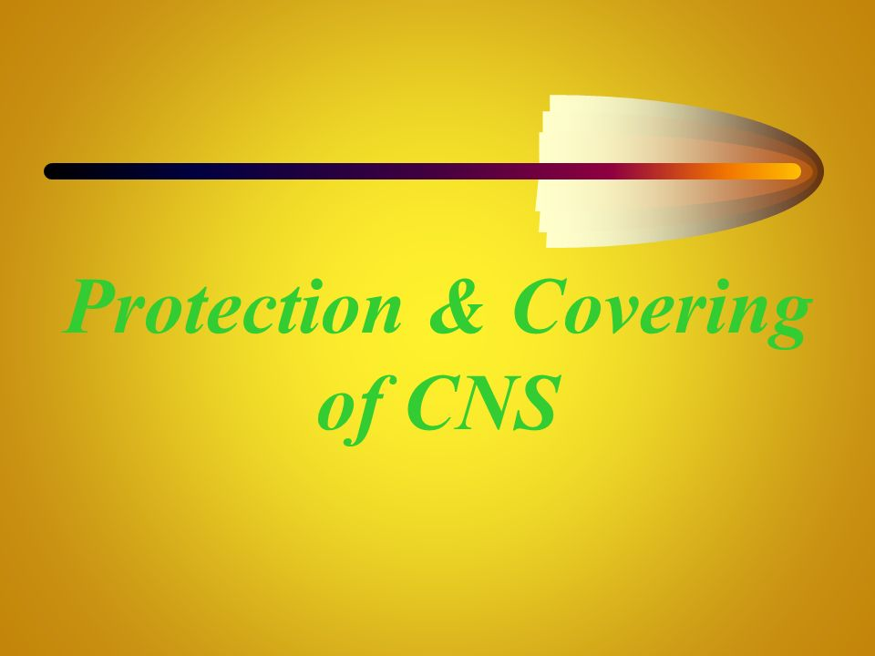 Protection & Covering of CNS
